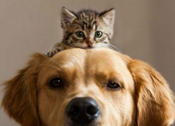 Шампунь для собак та котів від бліх в домашніх умовах