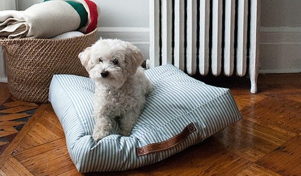 Лежак для собаки своїми руками: покрокова інструкція із фото