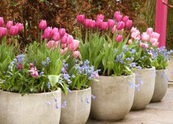 Прикрашаємо подвір'я велетенськими горшками для квітів. 25 ідей
