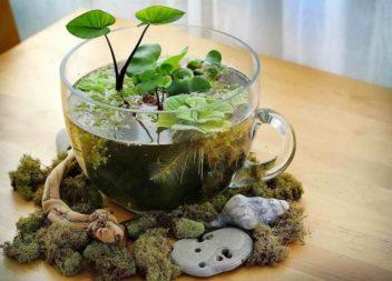 24 способи зробити декор з чашки