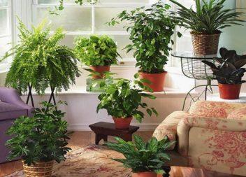 Кімнатні сади. 10 приголомшуючих ідей