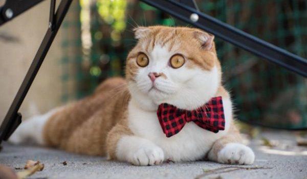Кумедний одяг для котиків: 28 фото-ідей