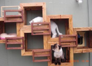Ігровий простір для кішки: 20 ідей для невеликої квартири