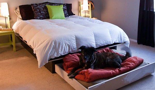 Лежанки для собак: 16 ідей