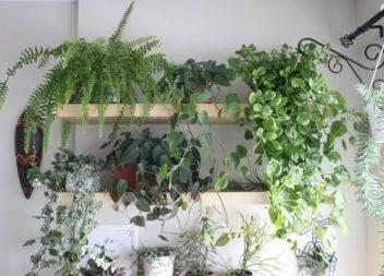 Кімнатні в'юнки: 20 ідей для домашнього саду
