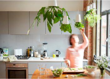 Вирощуємо трави на кухні: 24 ідеї