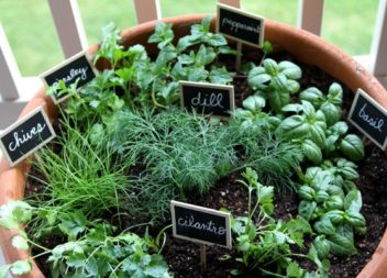 Рослини вдома: 20 ідей