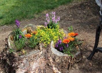 Пеньки для декору саду та подвір'я: 16 ідей