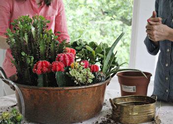 Кактуси для домашнього саду: 21 фото-ідея