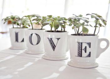 Рослини у чашках: 21 ідея для домашнього саду