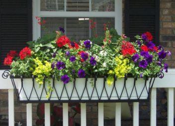 Квіти на вікнах: 21 ідея для озеленення