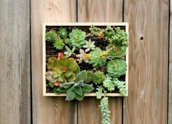 Настінні рослини: 17 ідей