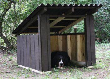 Як змайструвати собачу будку самостійно: фото-урок