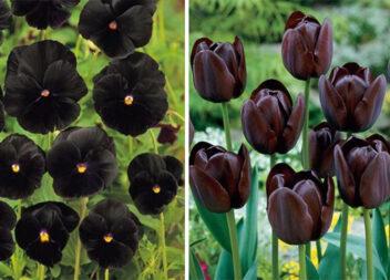 10 незвичайних темних квітів для вашого саду