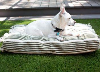 Подушка для собаки!
