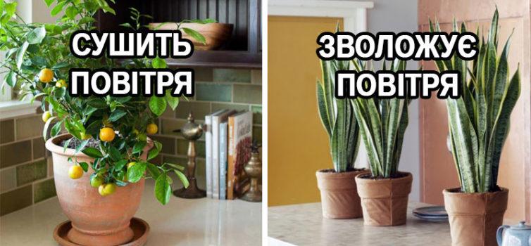 10 рослин для ідеального мікроклімату в будинку