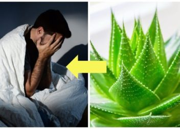 Для тих, хто погано спить і прокидається розбитим: 5 кімнатних рослин, які вирішать проблему безсоння