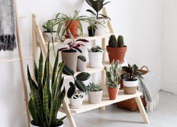 Підставки для кімнатних рослин (25 цікавих варіантів)