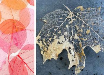 Композиції зі скелетованих листочків (ідеї та майстер-класи)