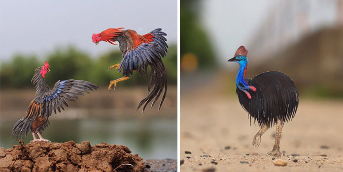 Мініатюрні пташки з паперу від індійських художників