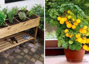 Вирощуємо овочі, фрукти та приправи в горщиках та ящиках: більше 60 ідей