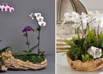 Горщик із дерева для орхідеї: 15 цікавих композицій