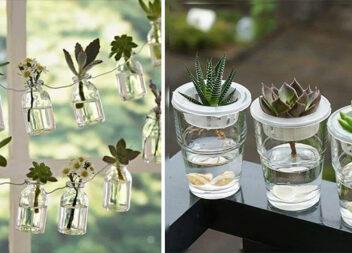 Рослини у скляних вазах-кашпо - цікавий декор для оселі