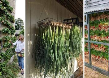 40 несподіваних і корисних ідей для городу та саду