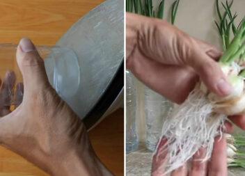 Перевірений і простий спосіб проростити кожен зубчик часнику