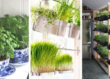 55 простих ідей, як смачно і красиво виростити зелень на кухні
