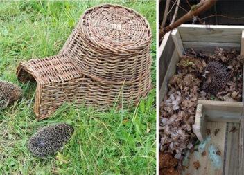 Як побудувати будиночок для їжака: 16 ідей для приватного саду