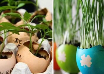 Незвично: знаходимо нове застосування яєчній шкаралупі та лотку для яєць