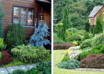 Хвойний сад біля будинку: більше 50 захоплюючих ідей для душі