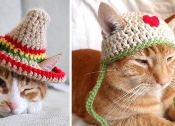 Ідеї шапочок для пухнастого домашнього улюбленця
