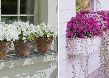 Чудові міні-клумби під вікнами для любителів живих квітів