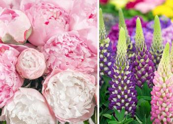 20 чудових рожевих багаторічних квітів, які будуть цвісти вічно