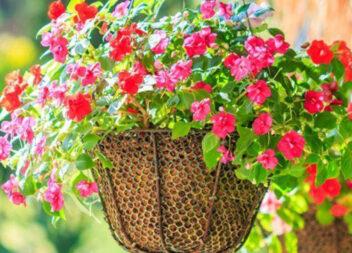 ТОП-8 найкрасивіших ампельних рослин для вашого саду
