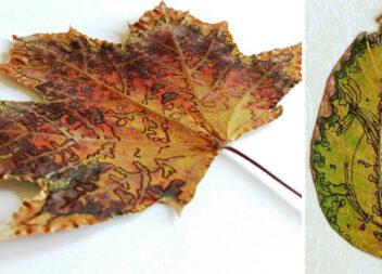 Як розфарбувати сушене листя. Заготівля оригінальних матеріалів для осінніх проектів